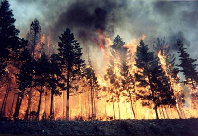 जंगल में आग से 23 मौत, 900 घायल