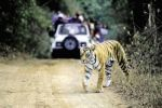 वाइल्ड लाइफ पार्क में बाघ ने बोला दो महिलाओं पर हमला, एक की मौत एक बुरी तरह जख्मी