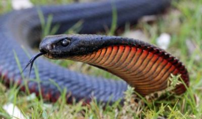 This app will save your life from a snake bite, available on android and iPhone