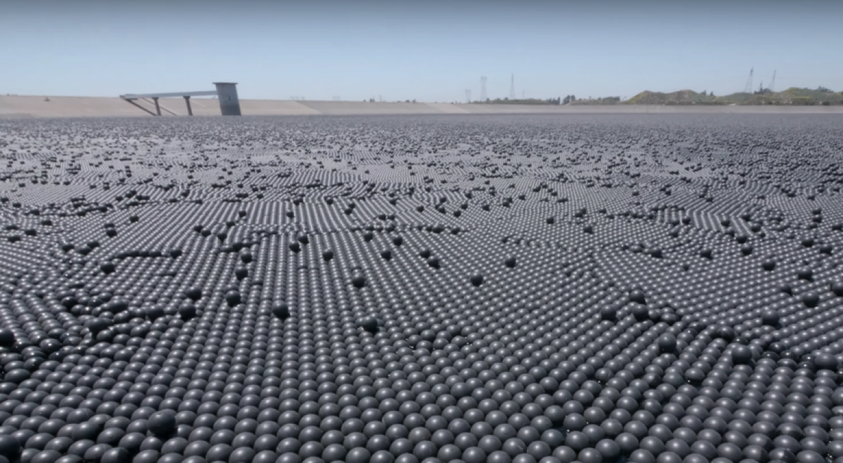 American laid 96 million black balls in a pond. What for?