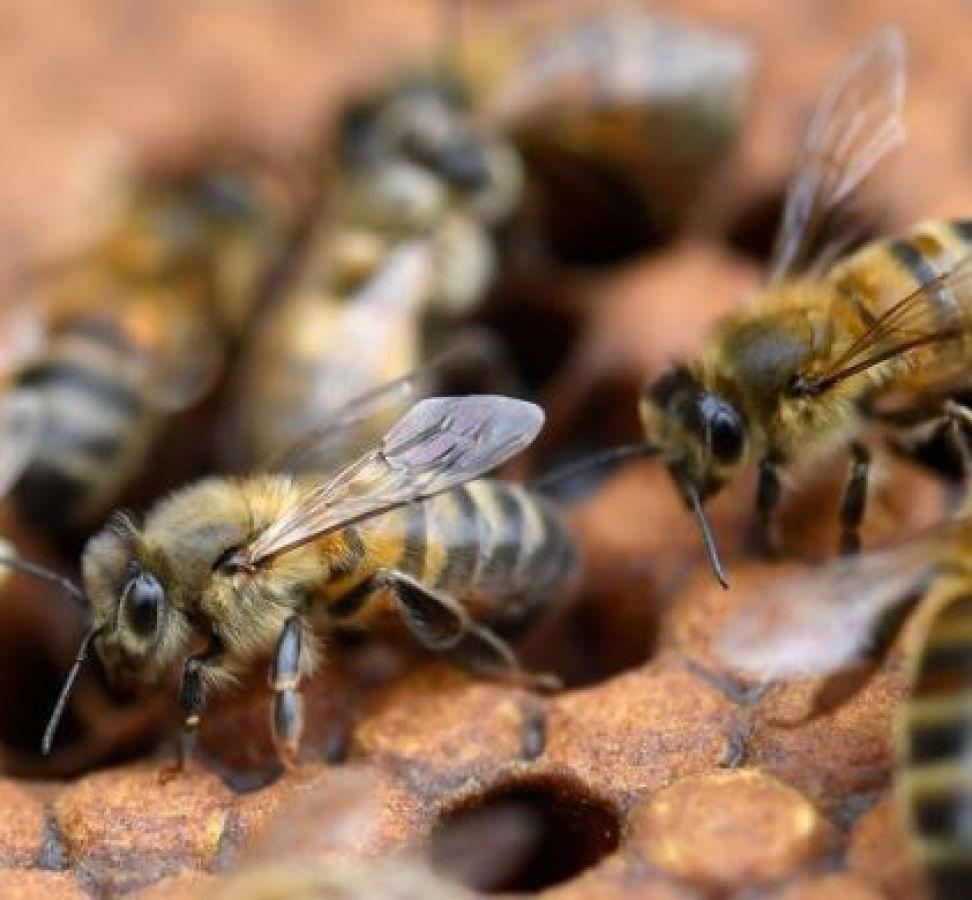 इस लड़की की आँख में घुसी मधुमक्खियां, सूखा दी पूरी आँखें
