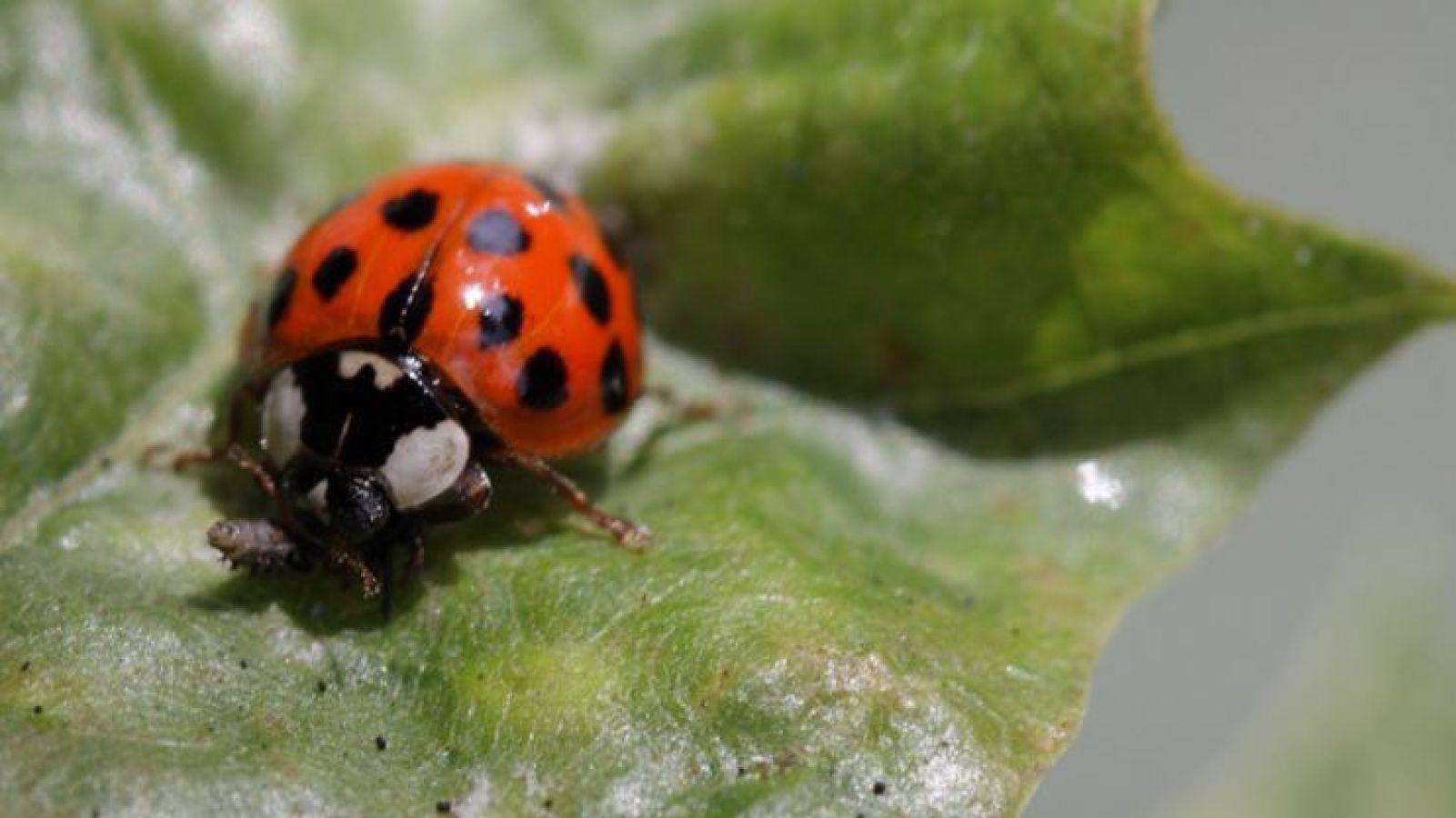 इस कीड़े के कारण के घरों में कैद हो रहे हैं लोग, इतना ही खतरनाक