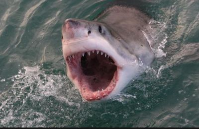 18-year-old surfer bitten on the hand by a shark at Florida beach