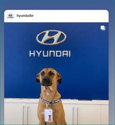 hyundai showroom in brazil hires street dog as car salesman sc108 nu612 ta612