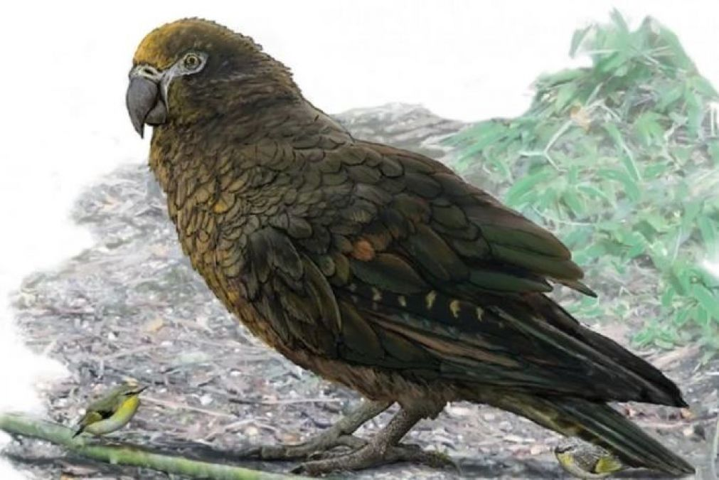 Scientists discover bones of 190 million-year-old parrot, research revealed after 11 years!