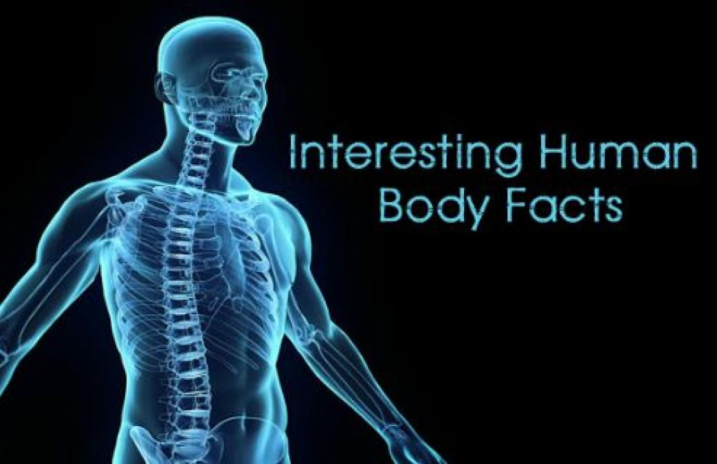 Human Head Contains 22 Bones, read other Interesting Facts!