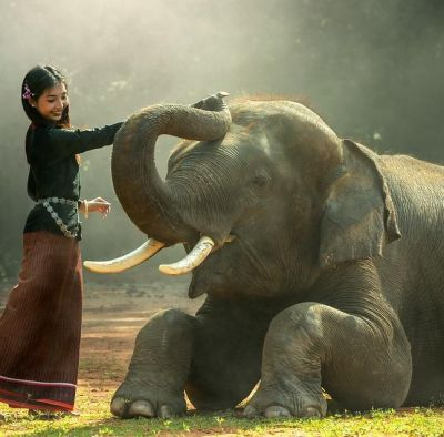 World Elephant Day: Elephants on verge of extinction, only 2 Out of 170 Species Survived today