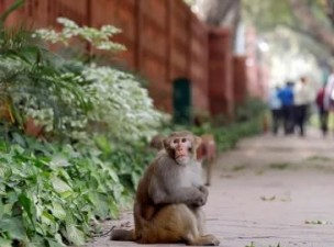 'Fake encounter' Monkey taught a lesson to a man, you will go ROFL