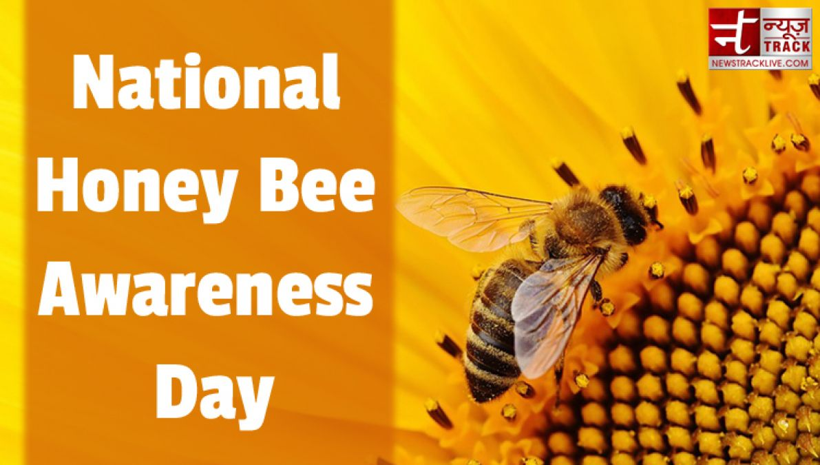 National Honey Bee Awareness Day: know amazing facts about bees
