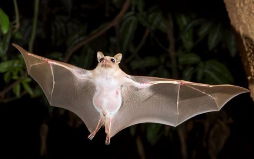 Bats have these special things in their wings, for which they are able to do acrobats at night!