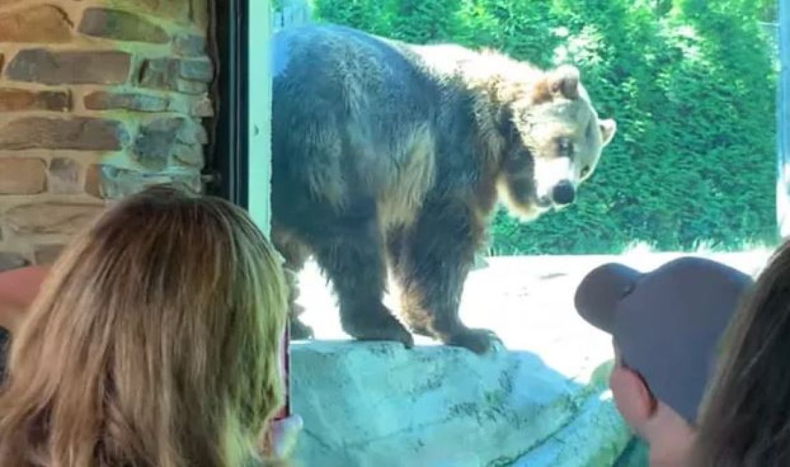 VIDEO:Bear surprised people by doing this thing in Zoo