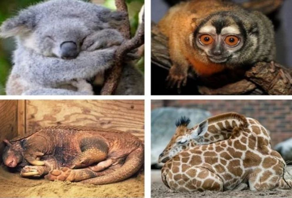 Know About The World's Weird Creatures, Someone Sleeps 22 Hours So some for Just 30 Minutes!