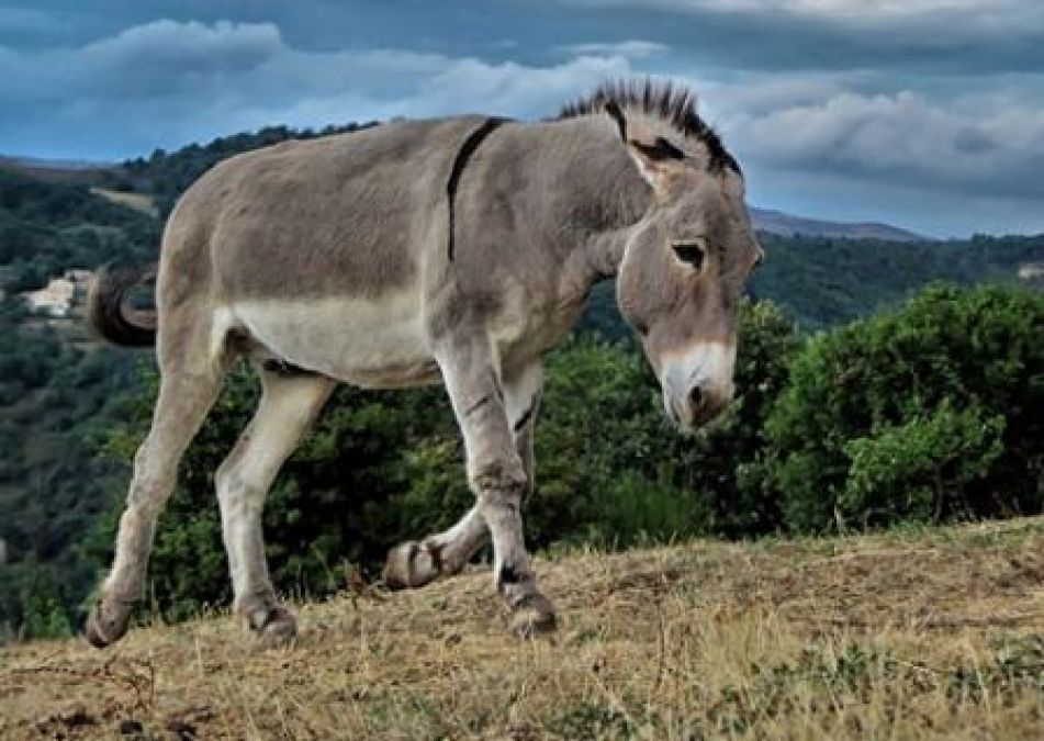 Amazing Facts: things you probably didn't know about Donkeys