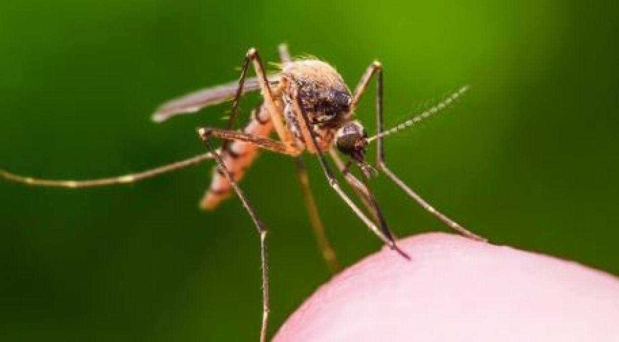तो इस कारण काटते हैं आपको मच्छर..