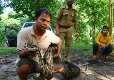 14-feet-long python found in Assam forest, released later