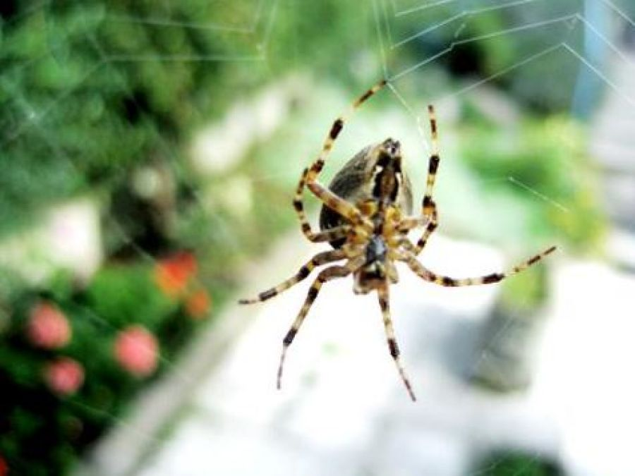 At the time of eclipse, spiders also finish their webs, learn interesting facts