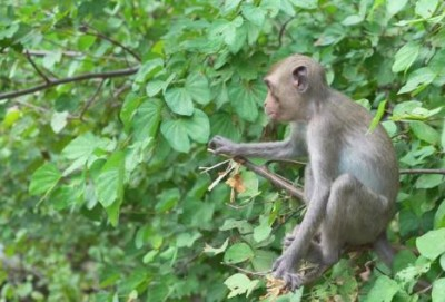 You'll be shocked to see this video of a monkey doing yoga!