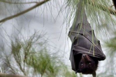 Once you see this video of bats, you will not stop laughing!