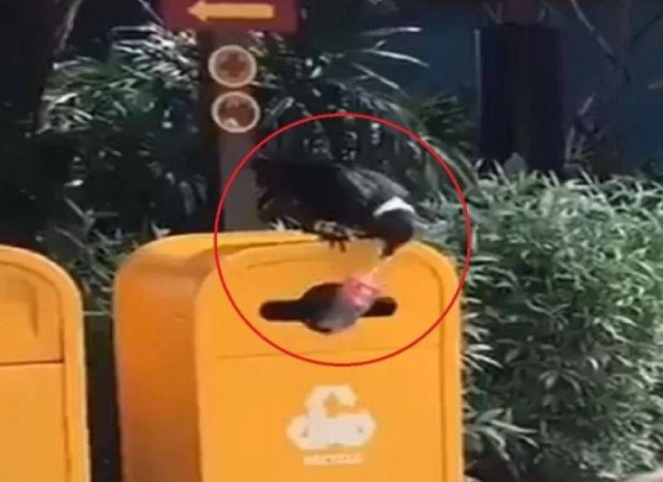 Viral Video: Crow throws an empty plastic bottle in dustbin