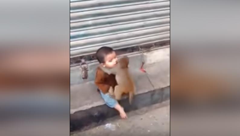 बंदर का बच्चा कुछ इस तरह सता रहा है एक बच्चे को..