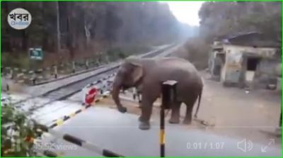 Elephant opens Railway Crossing Gate, Video going viral