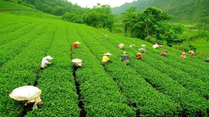 यहां लीजिये चाय के साथ पर्यटन का भी मज़ा