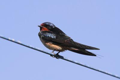 तो इस वजह से तार पर बैठे पक्षियों को नहीं लगता है करंट