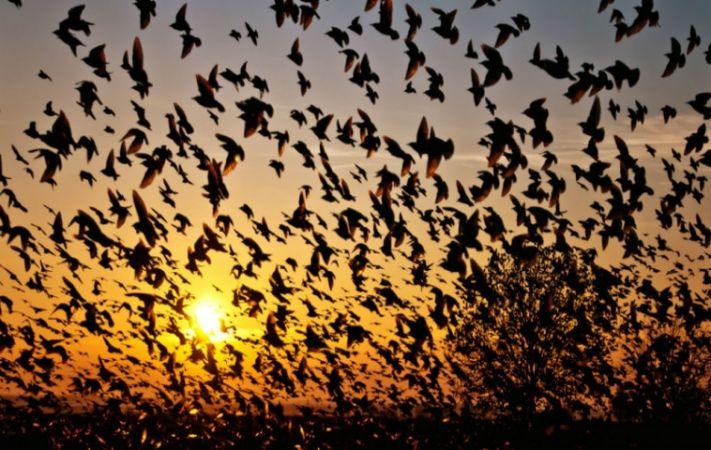 देश की ये जगह बन गई है पक्षियों की सुसाइड पॉइंट, आ कर लेते हैं आत्महत्या
