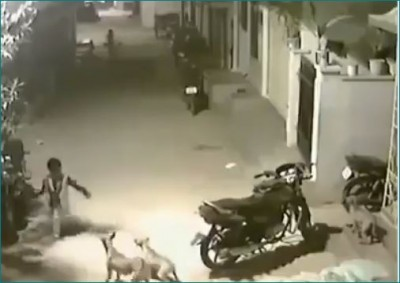Video: 3 dogs run after child, he did something that people became crazy