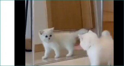 Kitten saw his shadow, did something that would make you laugh