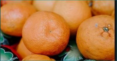 4 people ate 30 kg of oranges to avoid flight's excess baggage fees