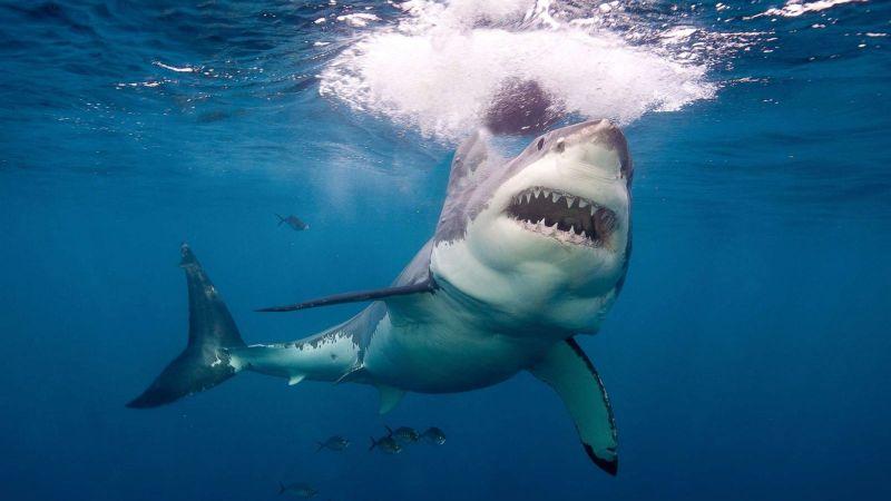 17 शार्क से भरे टैंक में कूदा ये शख्स और फिर...