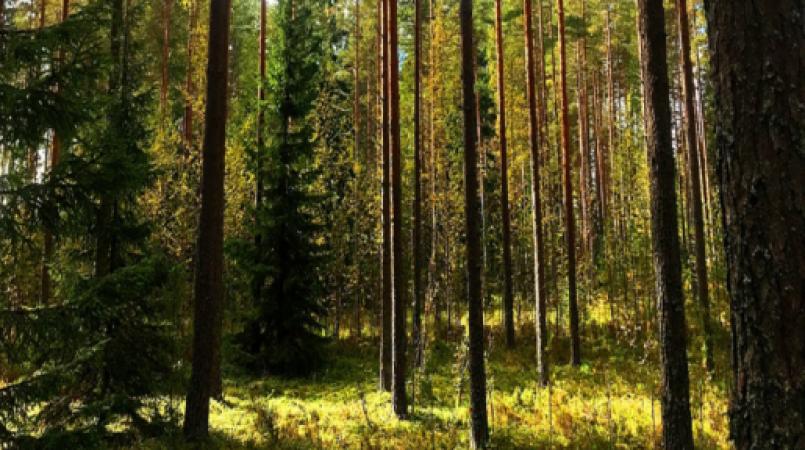इस महिला की 47 साल पहले खो गई थी अंगूठी, ऐसी हालत में फिनलैंड के जंगल से मिली