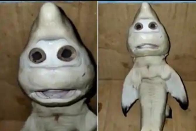 मछुआरे को मिला शार्क का बच्चा, तस्वीर देख हैरान रह जाएंगे आप
