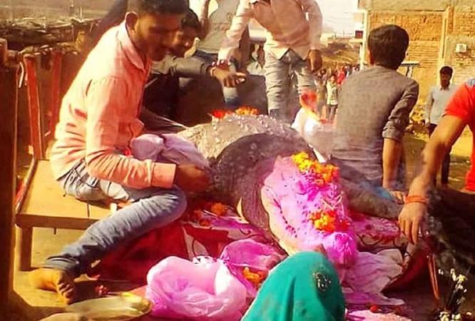 'गंगाराम' मगरमच्छ की मौत पर रोया पूरा गांव, खाता था दाल-चावल