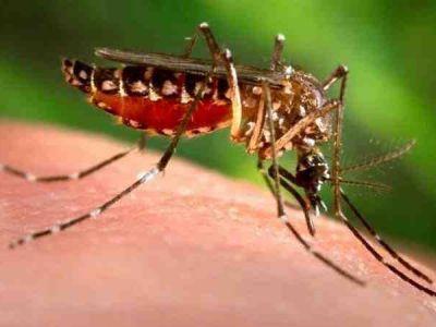अमेरिकी वैज्ञानिक ने तैयार किया मच्छरों का दुश्मन, ऐसे करेगा काम