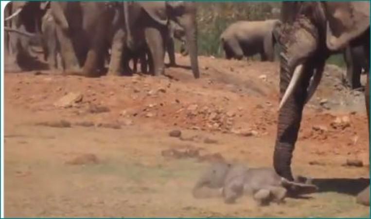 Video: गुस्से में हाथी कर रहा था बच्चे की पिटाई, बचाने पहुंची हथिनी और फिर...