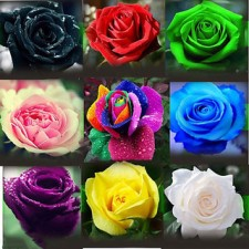 Express your love with these roses on Rose Day