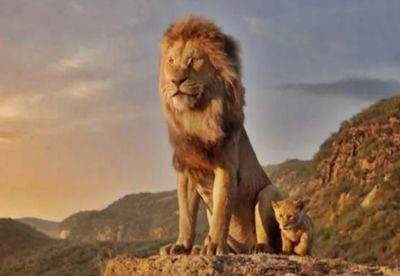When the real lions encountered the fake lion, it came to the fore...