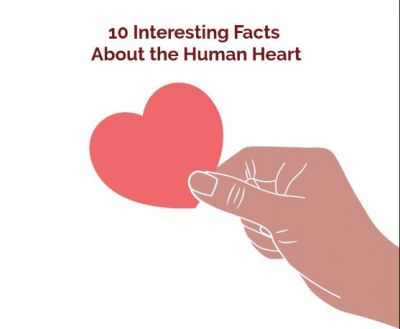 Amazing facts about heart, read here