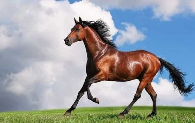 The First Year of a Horse Is Equal to 12 Years of Man, Know Interesting Facts