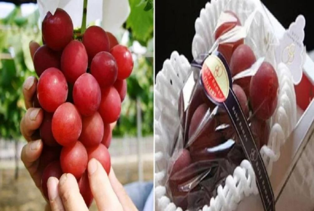 Here grapes sell at the price of gold, the price of a bunch will blow your senses