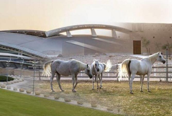 यहां घोड़ों को मिलती है 5 स्टार होटल जैसी सुविधा