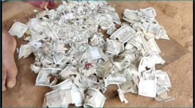 Rats shred farmer's Rs 2 lakh in Telangana's Mahabubabad