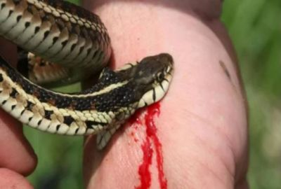 Snake got in trouble on beating an Elderly man