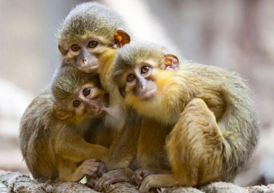 Monkeys worth just 1 kilogram were found here 42 million years ago!
