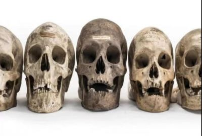Here are human skulls sold online, Know other special facts