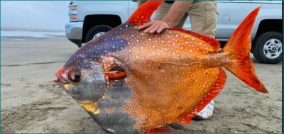 Colorful fish rinsed off on the beach, everyone's senses blown away
