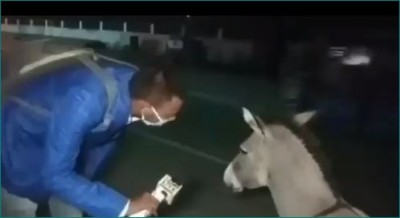 Donkey's interview goes viral, the reporter asks 'Why you haven't wear mask ?'