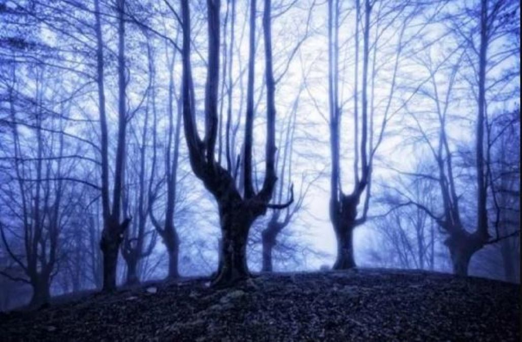 The world's scariest forest will make feel haunted!
